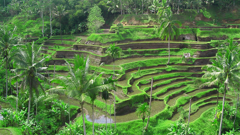 Tegalalang-Rice-Terrace-2